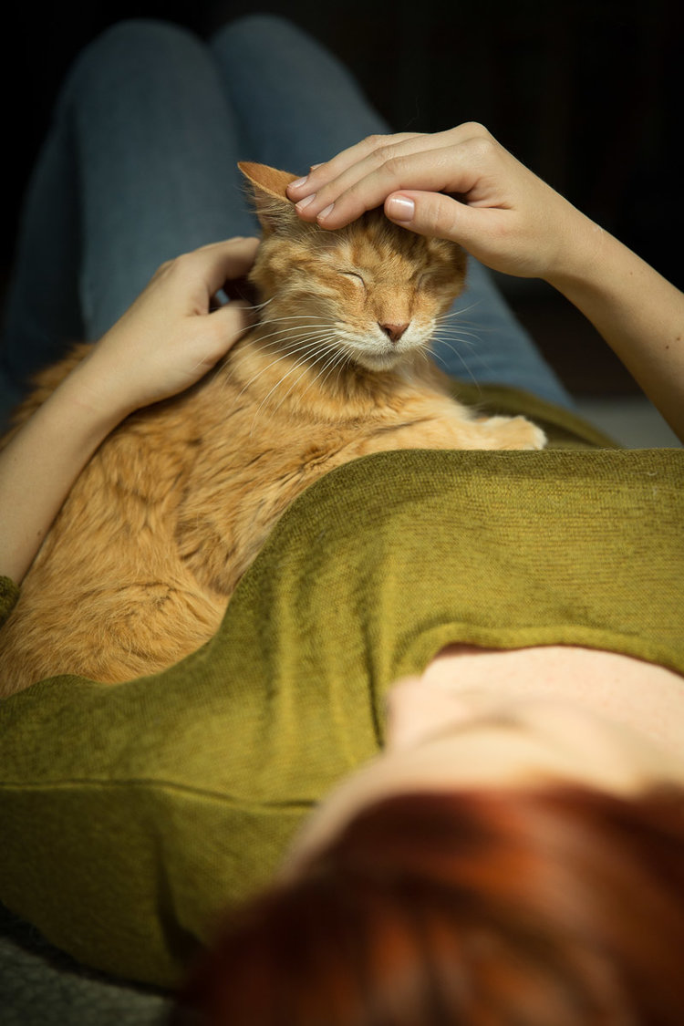 woman-petting-cat-photography.jpg