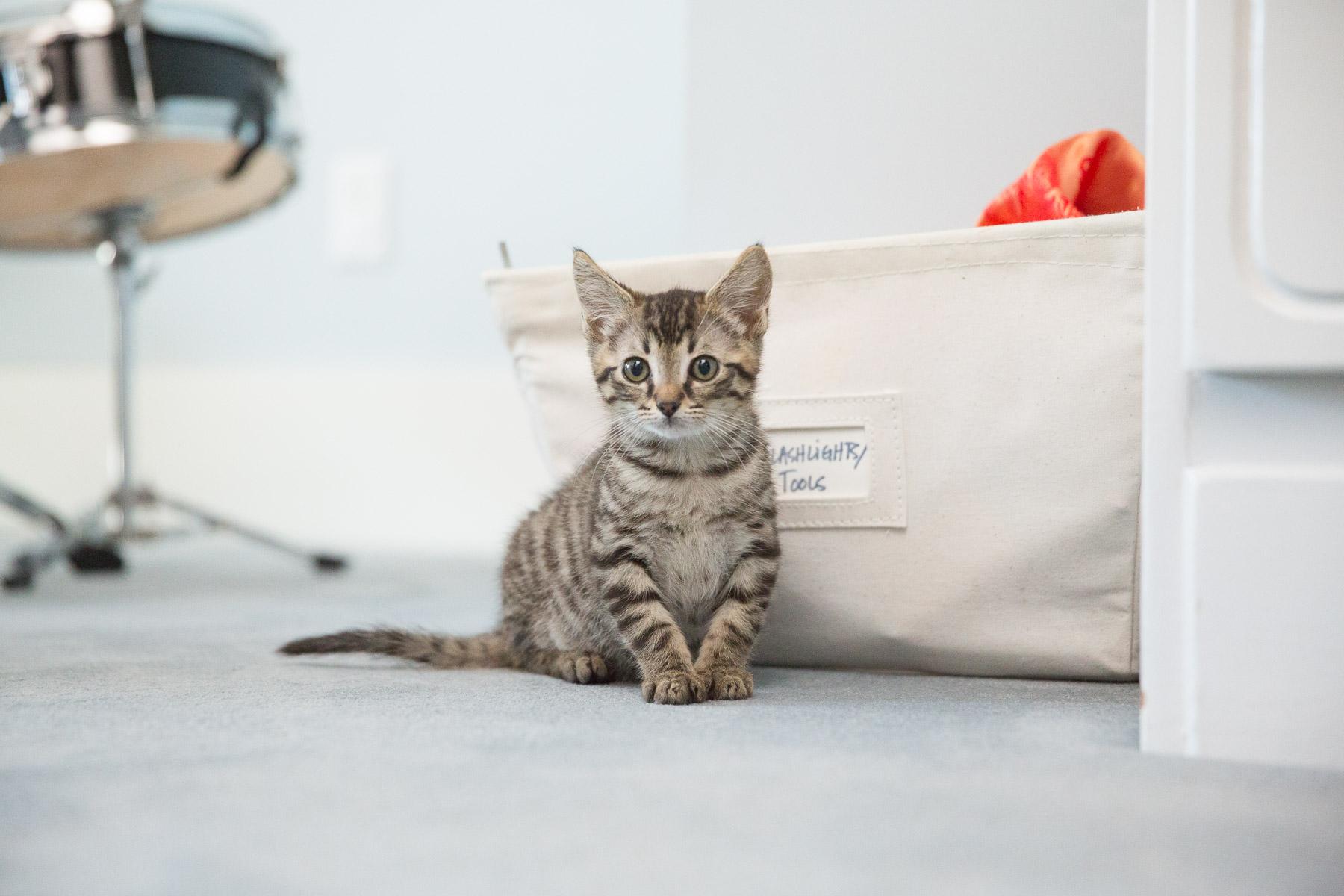 little-cat-bedroom-cat-photography.jpg