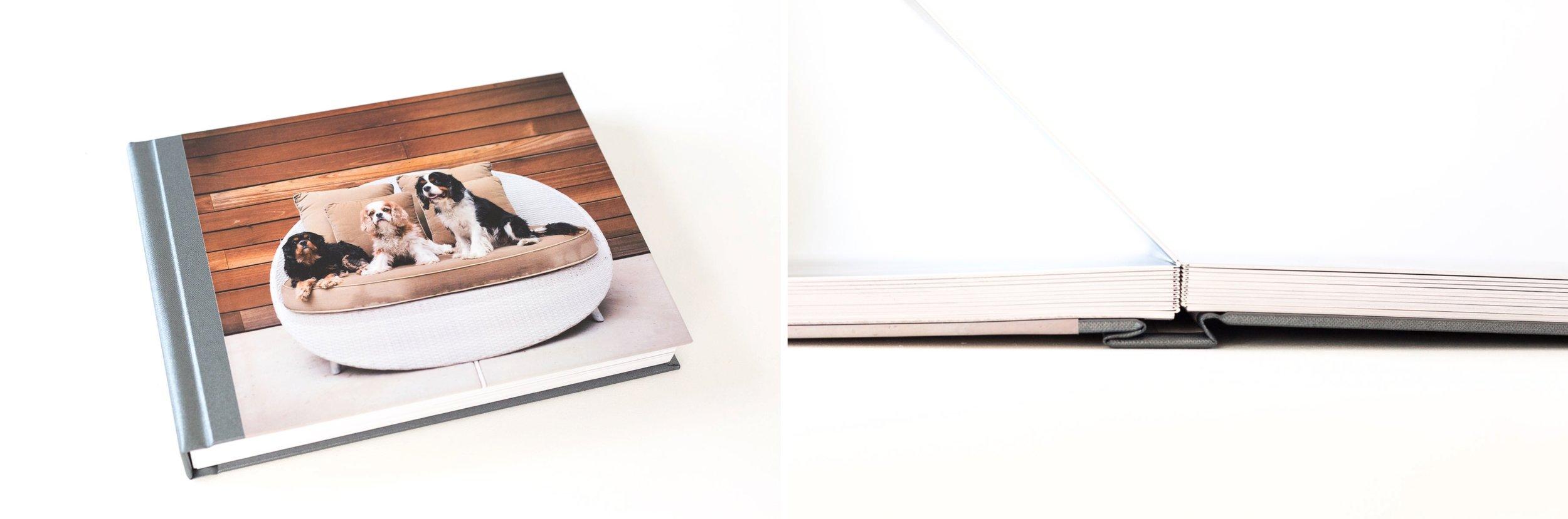 album-pet-photography-example.jpg