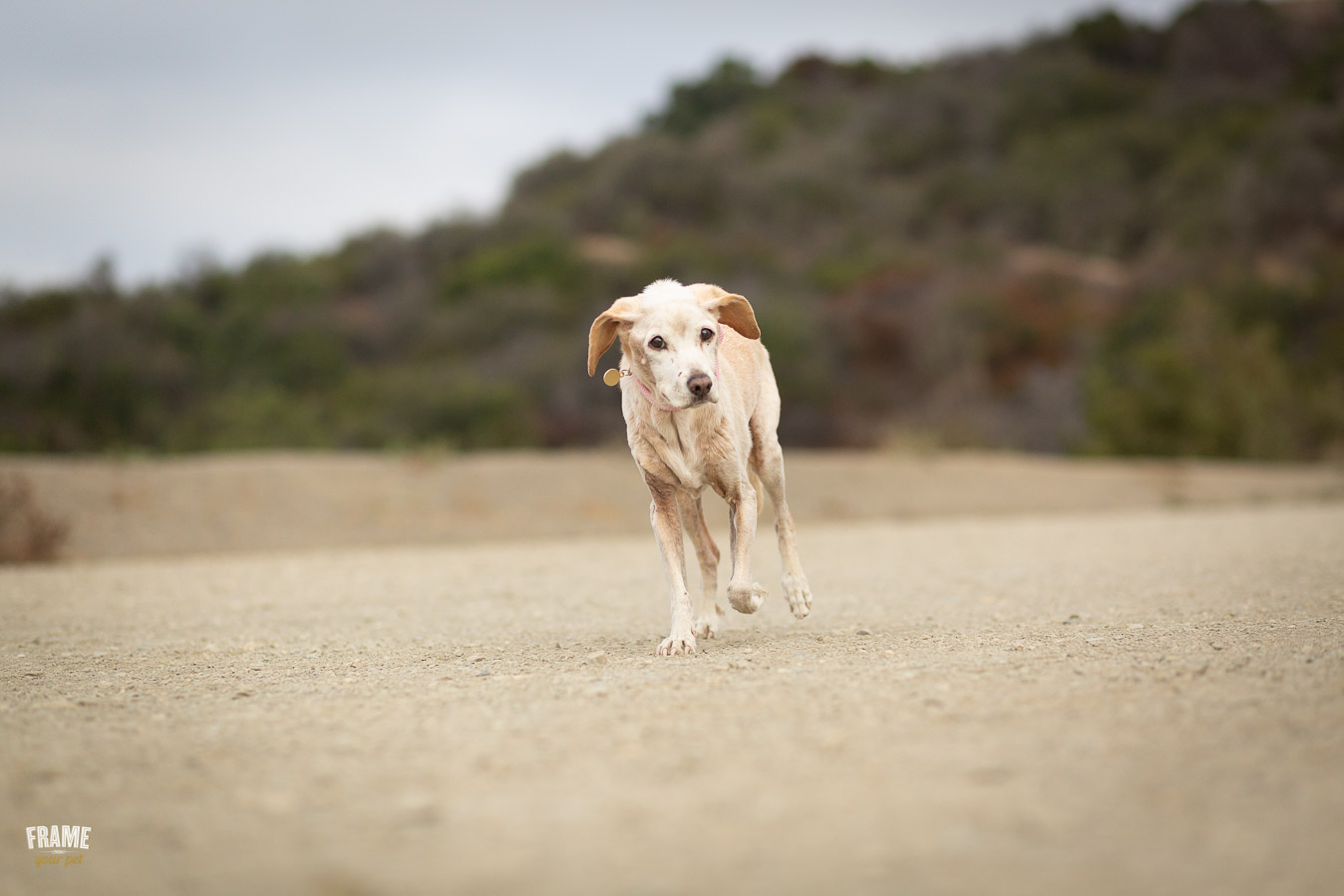 ARP_0256-dog-photographer-los-angeles-pet-photography-santa-monica-animal-photos.jpg