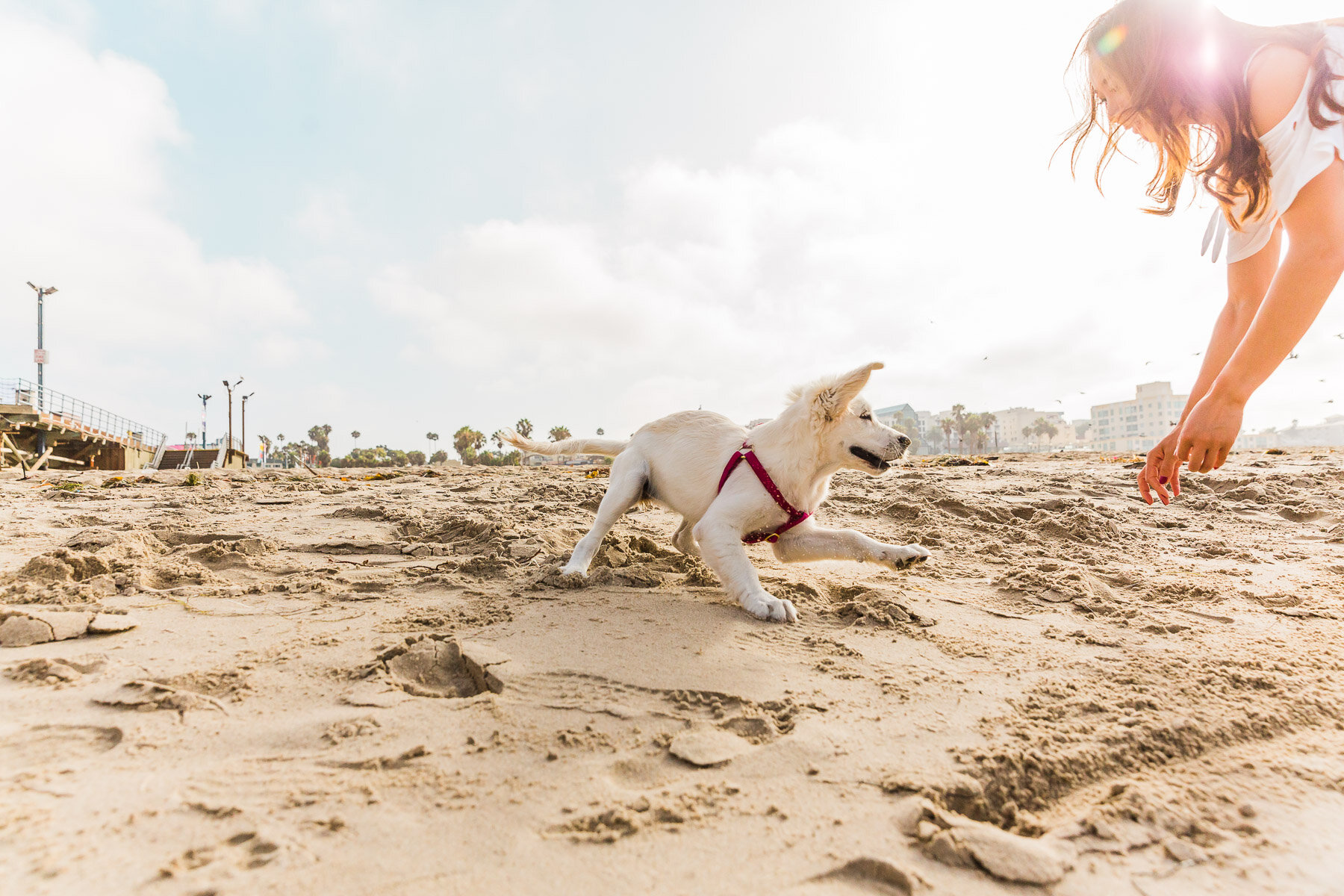 girl-playing-with-dog-beach-fetch.jpg