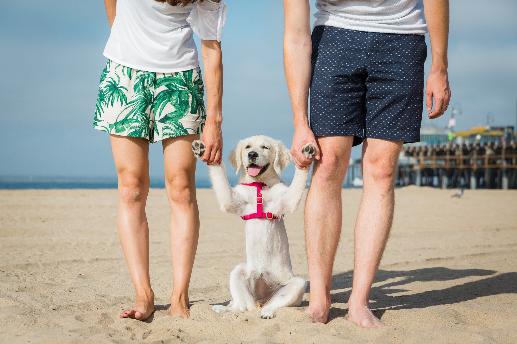 couple-holding-puppy-beach-santa-monica-pier-los-angeles-animal-photographer.jpg