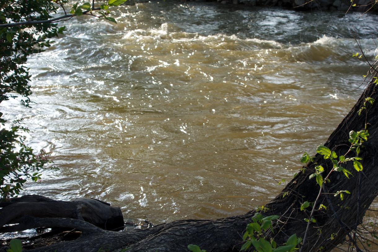 Boulder Creek, 23 May
