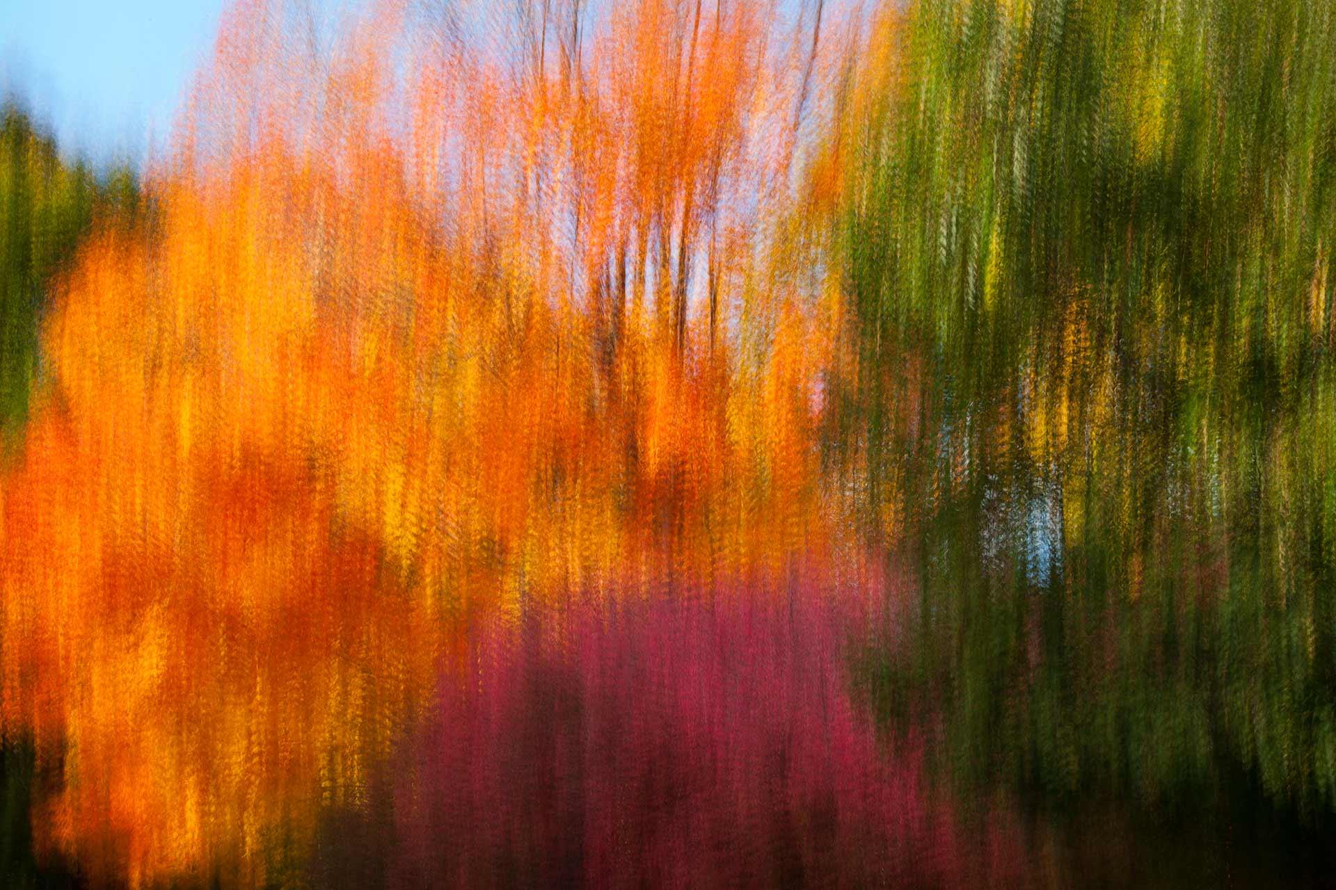 Raining Autumn