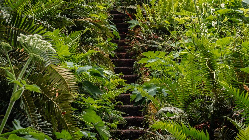 Fern Stairs.jpg