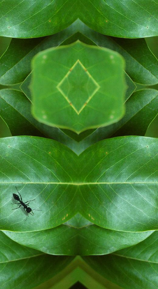 D01_fantastic leaf_02.jpg