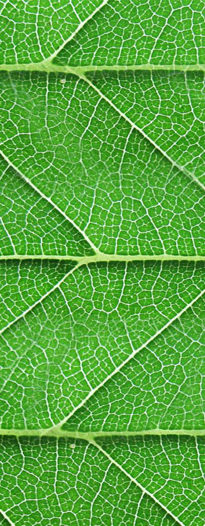 W41_fantastic_leaf_01.jpg