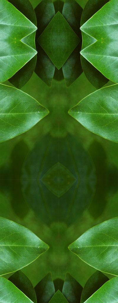 W41_fantastic_leaf_02.jpg