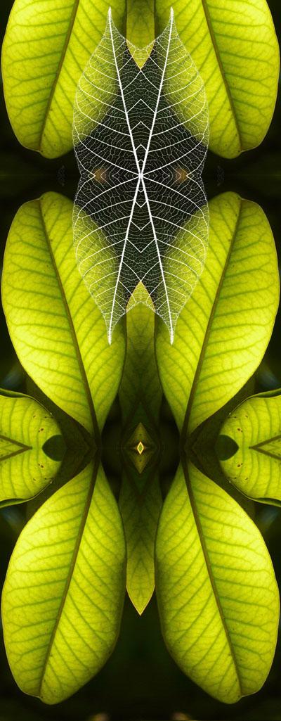 W41_fantastic_leaf_03.jpg