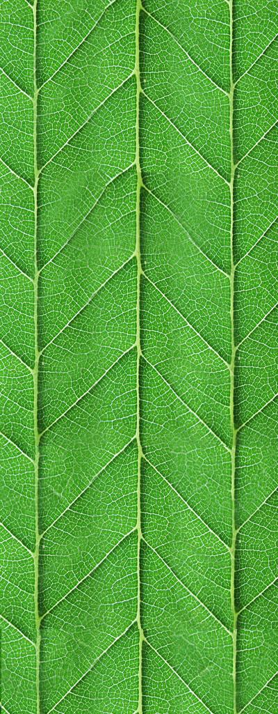W41_fantastic_leaf.jpg