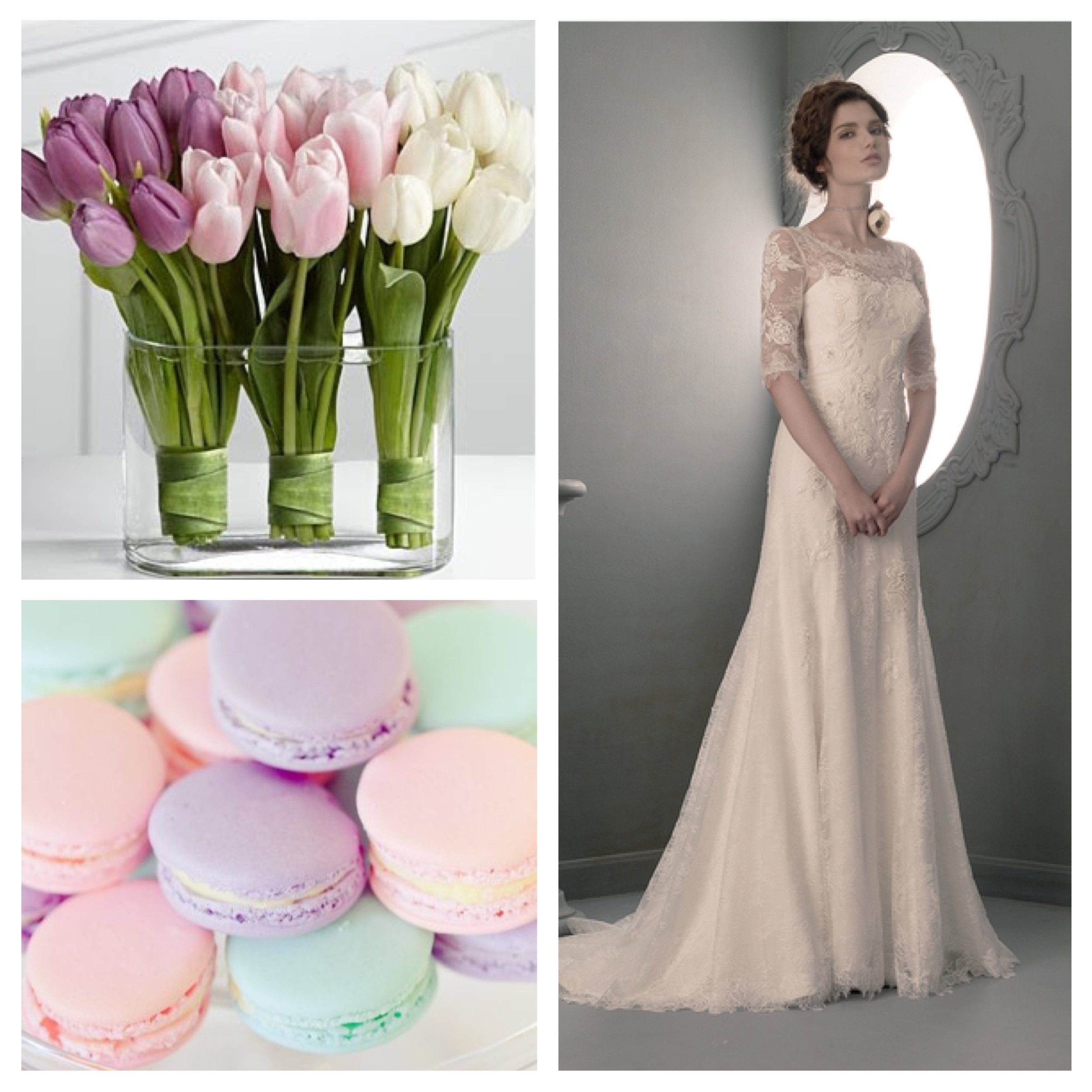 Tulips ,  Macaroons,   St. Pucchi 702