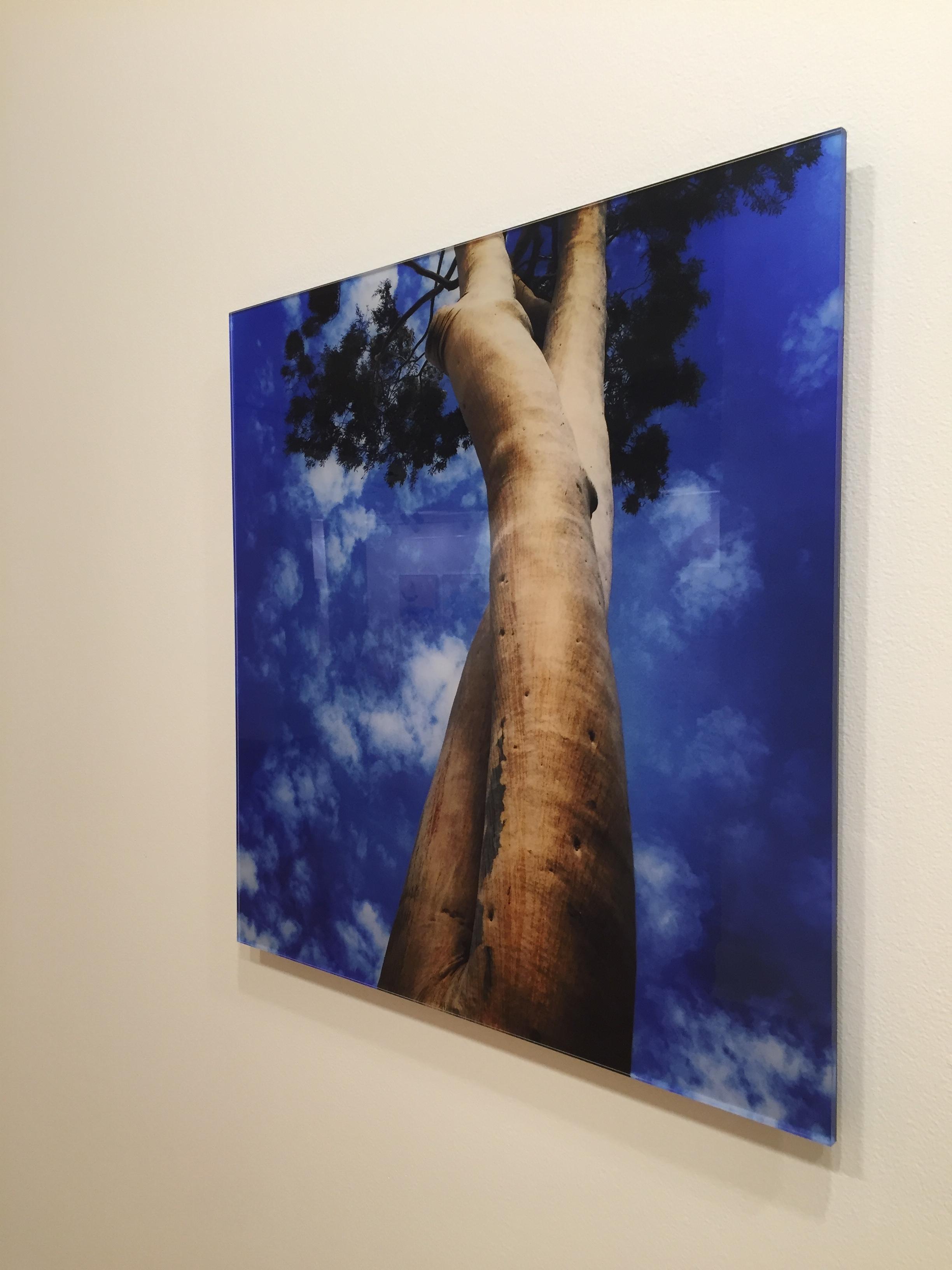 14. Tree Legs, $390