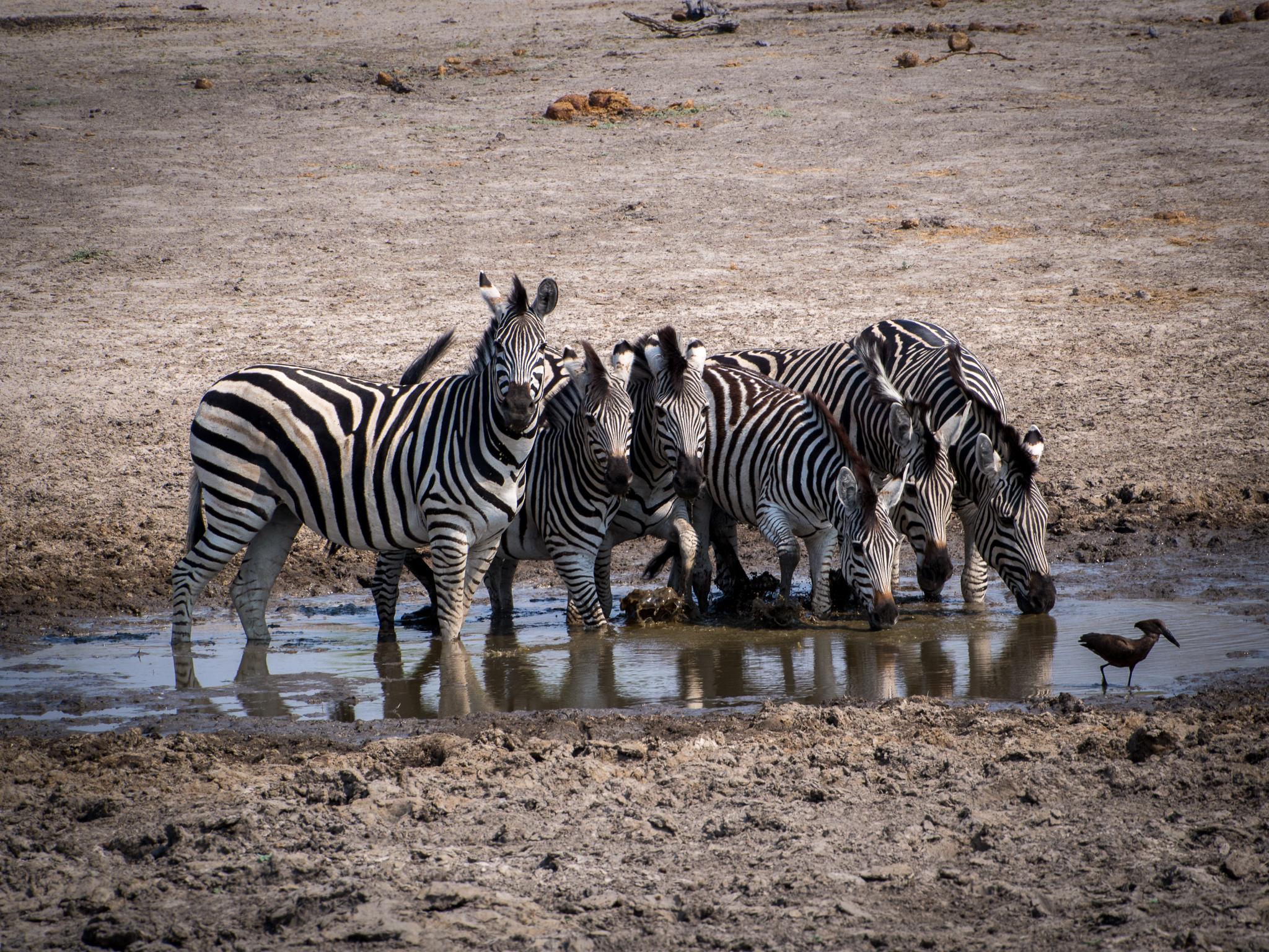 Maun, Botswana, Selinda Camp (644 of 1231).jpg