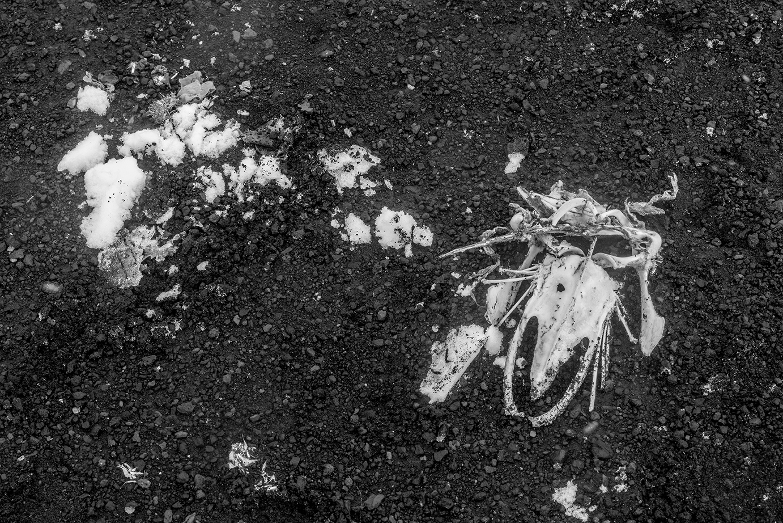 Mystery Skull - DECEPTION ISLAND