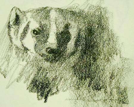 Badger,Gabor Svagrik-1.jpg