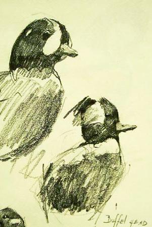 Buffel Head Duck,Gabor Svagrik.jpg