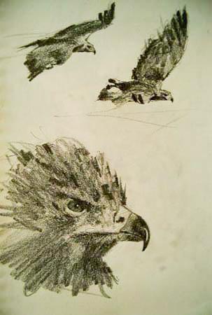 Golden Eagle,Gabor Svagrik.jpg
