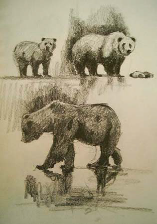 Grizzly Bear Drawing