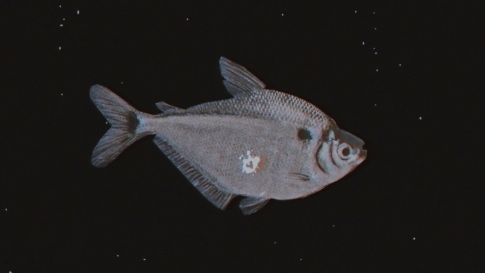 the night fish 2.png