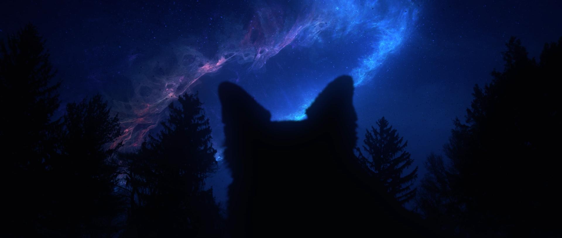 Dog in the Woods_Still 1.jpg