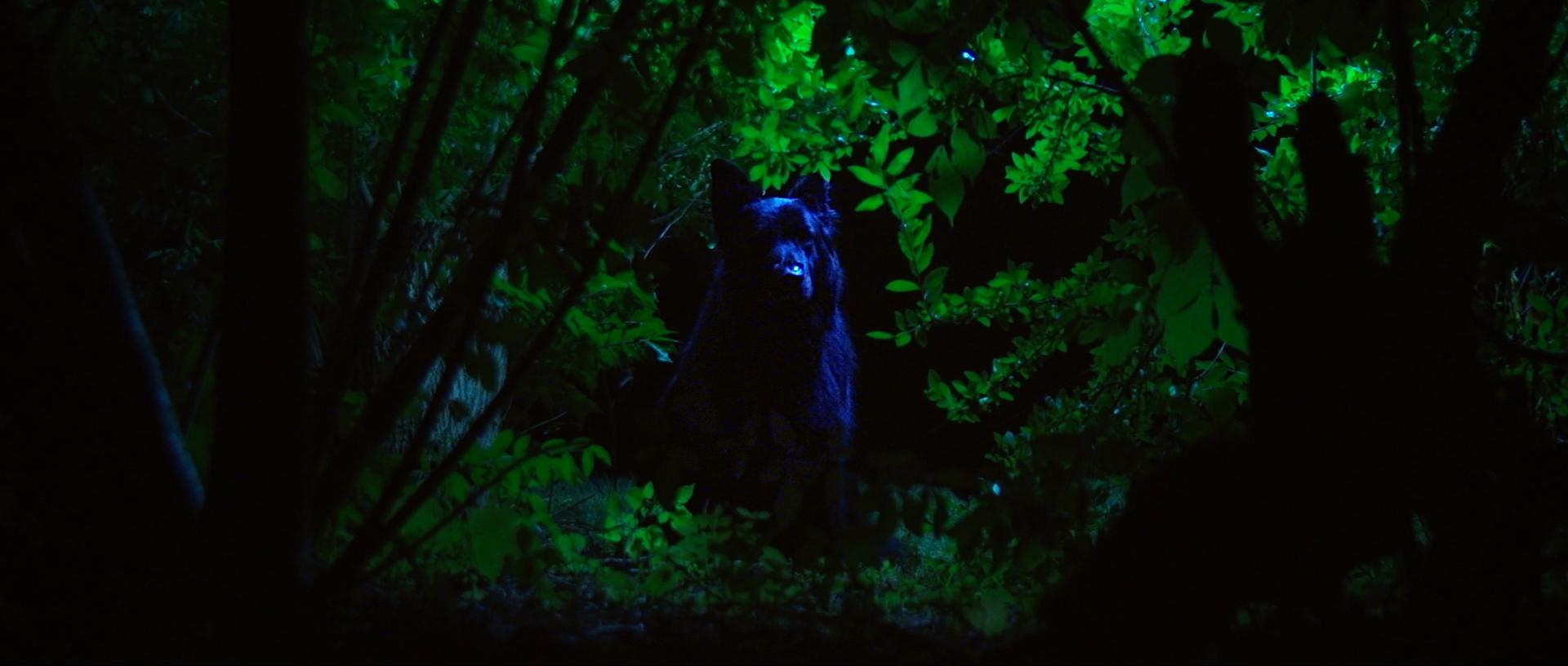 Dog in the Woods_Still 6.jpg
