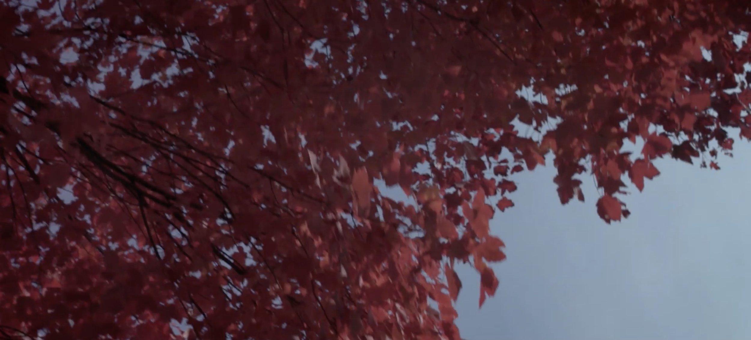 11. Fall.jpg