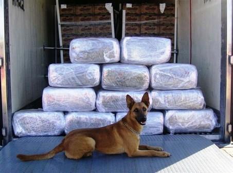 large-drug-dog.jpg