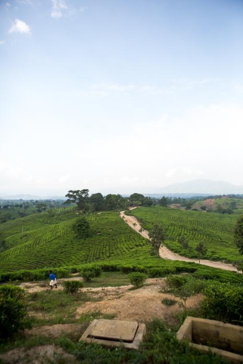 professional-photography, orlando-travel-photographer, uganda, the-people-of-uganda, pygmies, medicine-man, bwindi-national-park, www.dynamitestudioinc.com-1.jpg