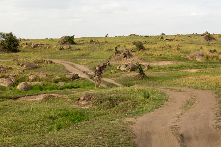 www.dynamitestudioinc.com-serengeti-africa-professional-travel-photography-orlando-7.jpg