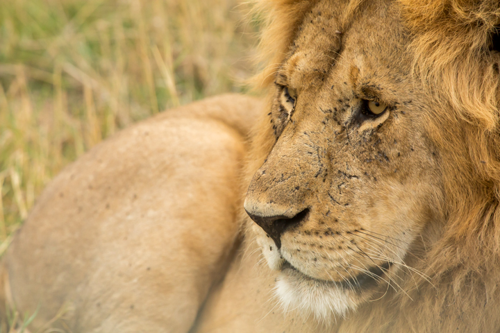 www.dynamitestudioinc.com-serengeti-africa-professional-travel-photography-orlando-15.jpg