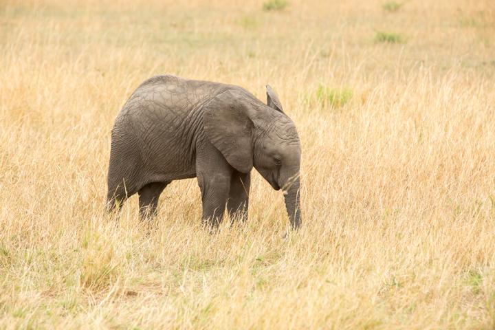 www.dynamitestudioinc.com-serengeti-africa-professional-travel-photography-orlando-18.jpg