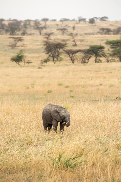 www.dynamitestudioinc.com-serengeti-africa-professional-travel-photography-orlando-19.jpg