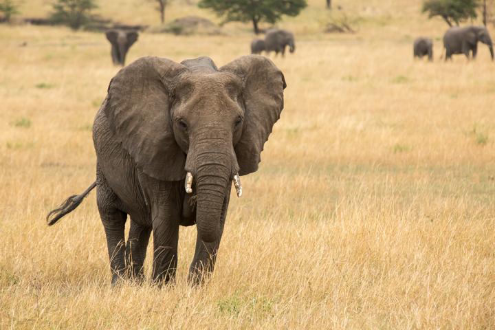 www.dynamitestudioinc.com-serengeti-africa-professional-travel-photography-orlando-20.jpg