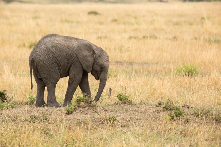 www.dynamitestudioinc.com-serengeti-africa-professional-travel-photography-orlando-24.jpg