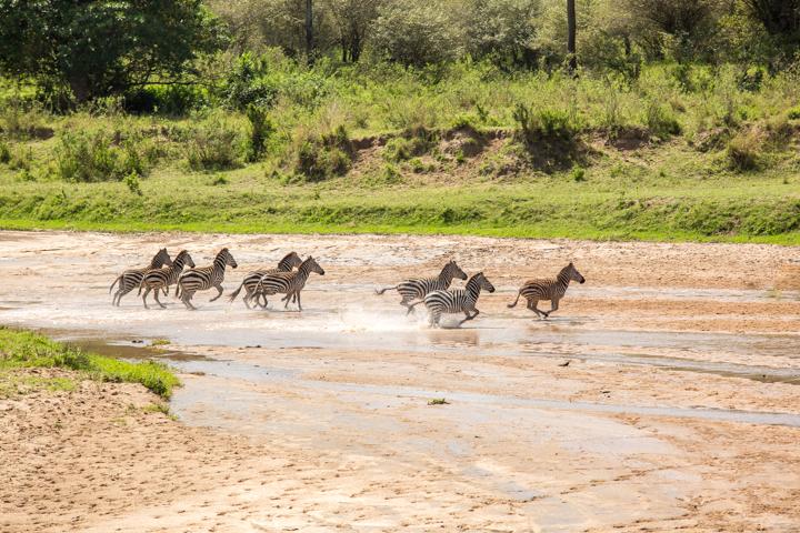 www.dynamitestudioinc.com-serengeti-africa-professional-travel-photography-orlando-44.jpg