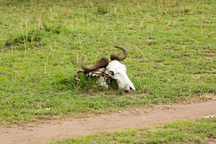 www.dynamitestudioinc.com-tanzania-serengeti-africa-professional-travel-photography-orlando-6971.jpg