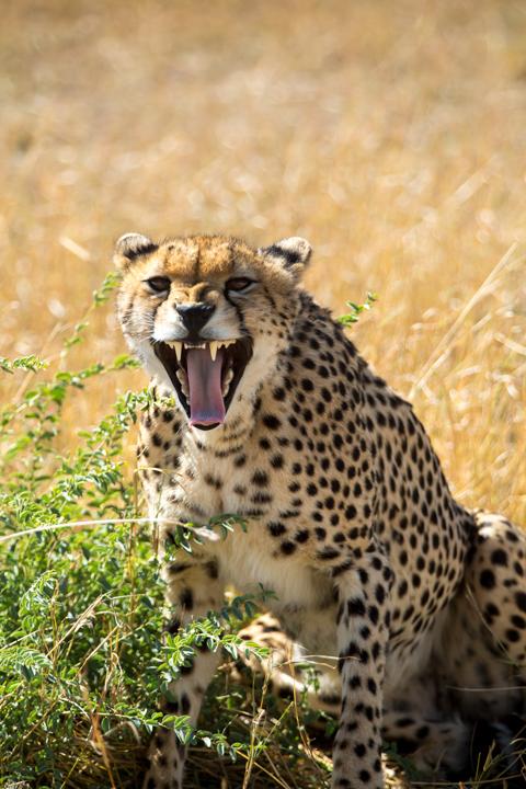 www.dynamitestudioinc.com-tanzania-serengeti-africa-professional-travel-photography-orlando-9286.jpg