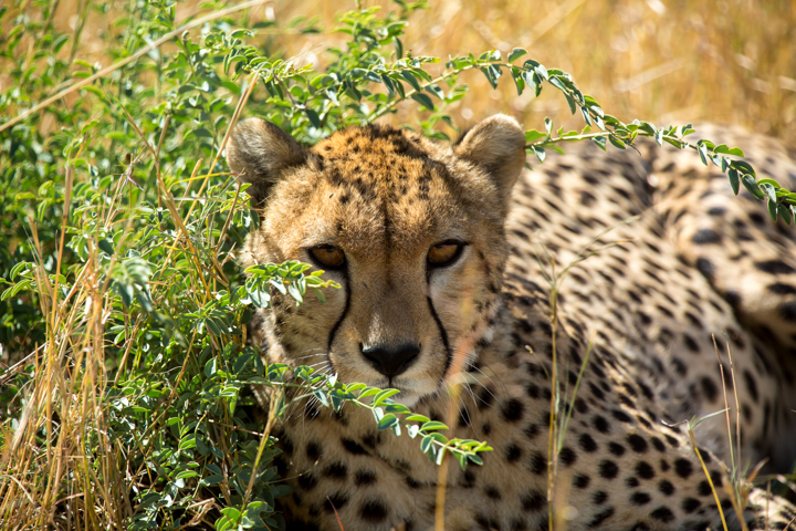 www.dynamitestudioinc.com-tanzania-serengeti-africa-professional-travel-photography-orlando-9304.jpg