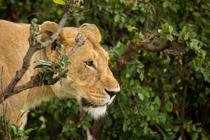 www.dynamitestudioinc.com-tanzania-serengeti-africa-professional-travel-photography-orlando-9685.jpg