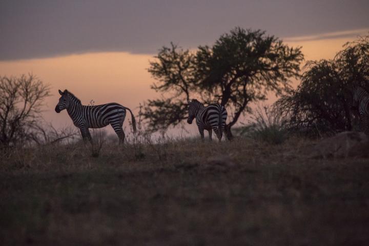 www.dynamitestudioinc.com-tanzania-serengeti-africa-professional-travel-photography-orlando-0092.jpg