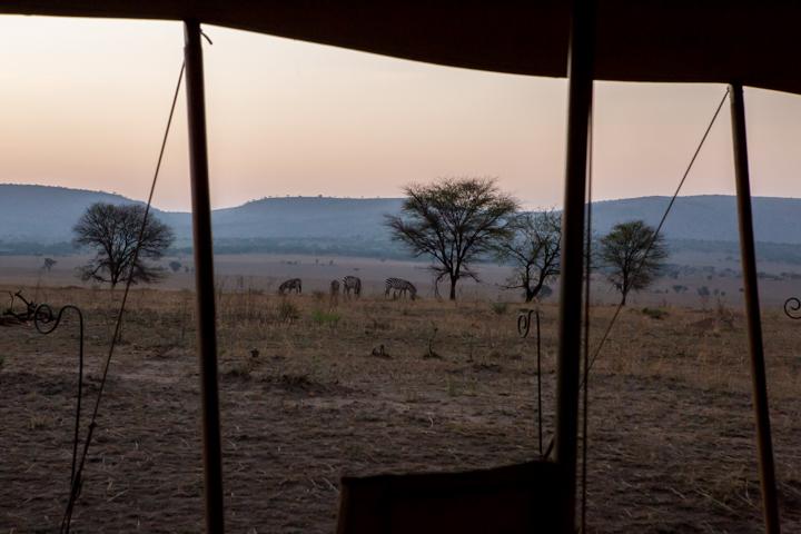 www.dynamitestudioinc.com-serengeti-africa-professional-travel-photography-orlando-1549.jpg