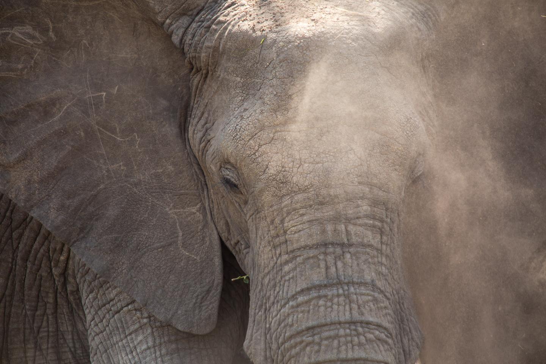 professional-travel-photographer-worldwide-international-orlando-elephant-safari-tanzania-africa-23.jpg