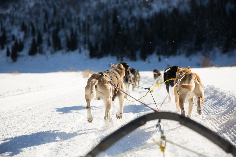 professional-travel-photographer-worldwide-international-orlando-dog-sledding-team-snow-13.jpg