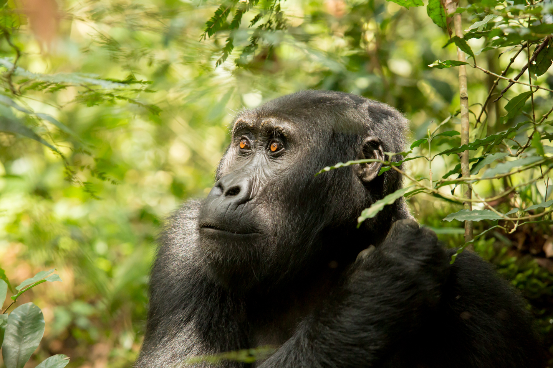 professional-travel-photographer-worldwide-international-orlando-gorilla-trek-mountain-bwindi-forest-31.jpg