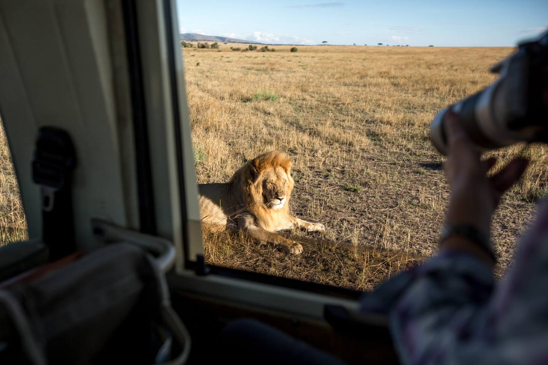 professional-travel-photographer-worldwide-international-orlando-lion-safari-big-five-cat-photo-documentary-25.jpg