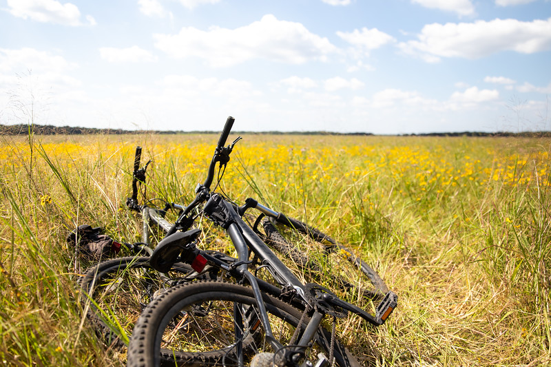 myakka-river-state-park-bikes-travel-international-florida-wildflowers-travel-photographer-professional-dynamite-studio-inc.jpg