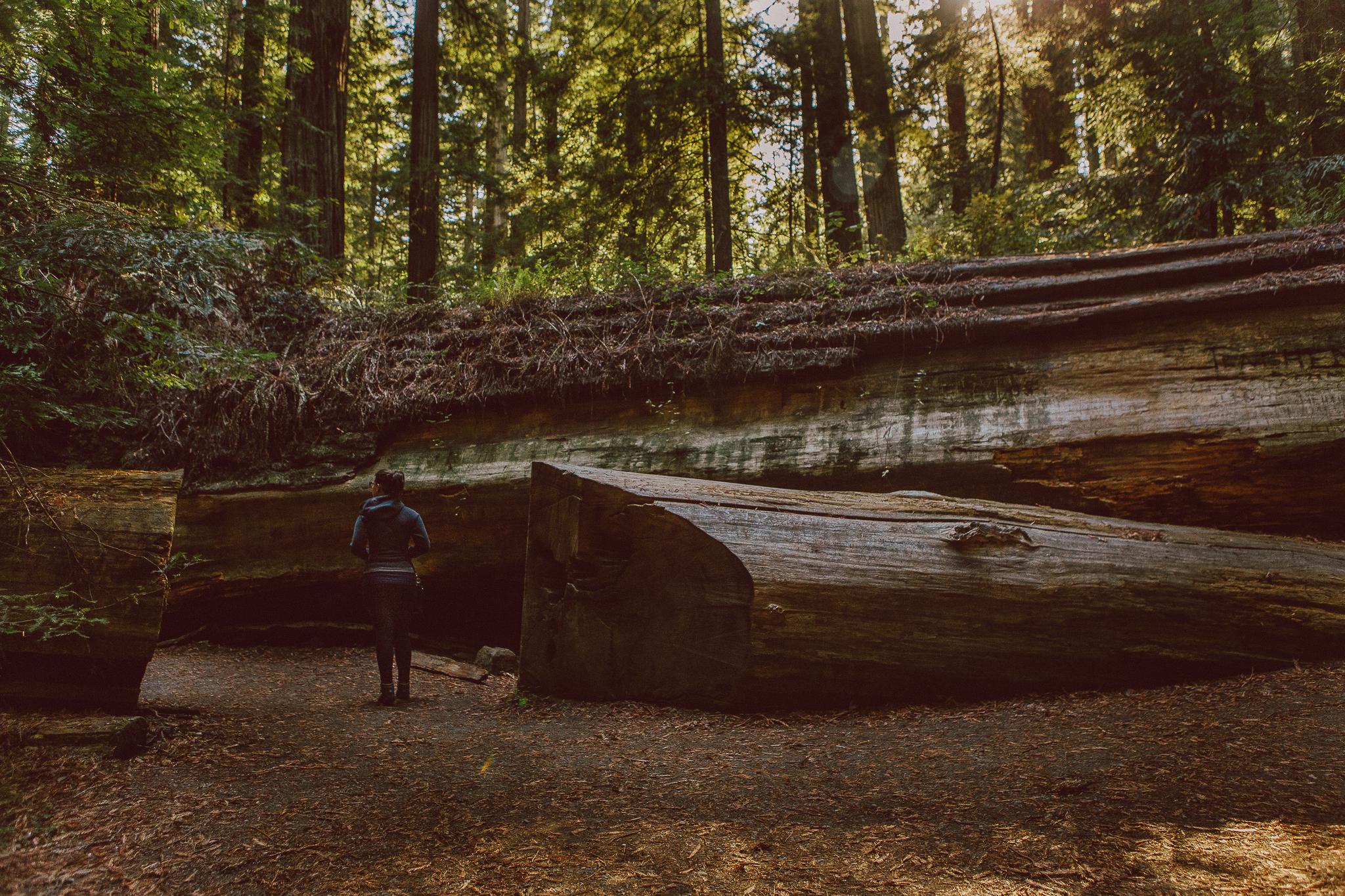 Amazing California redwoods photography