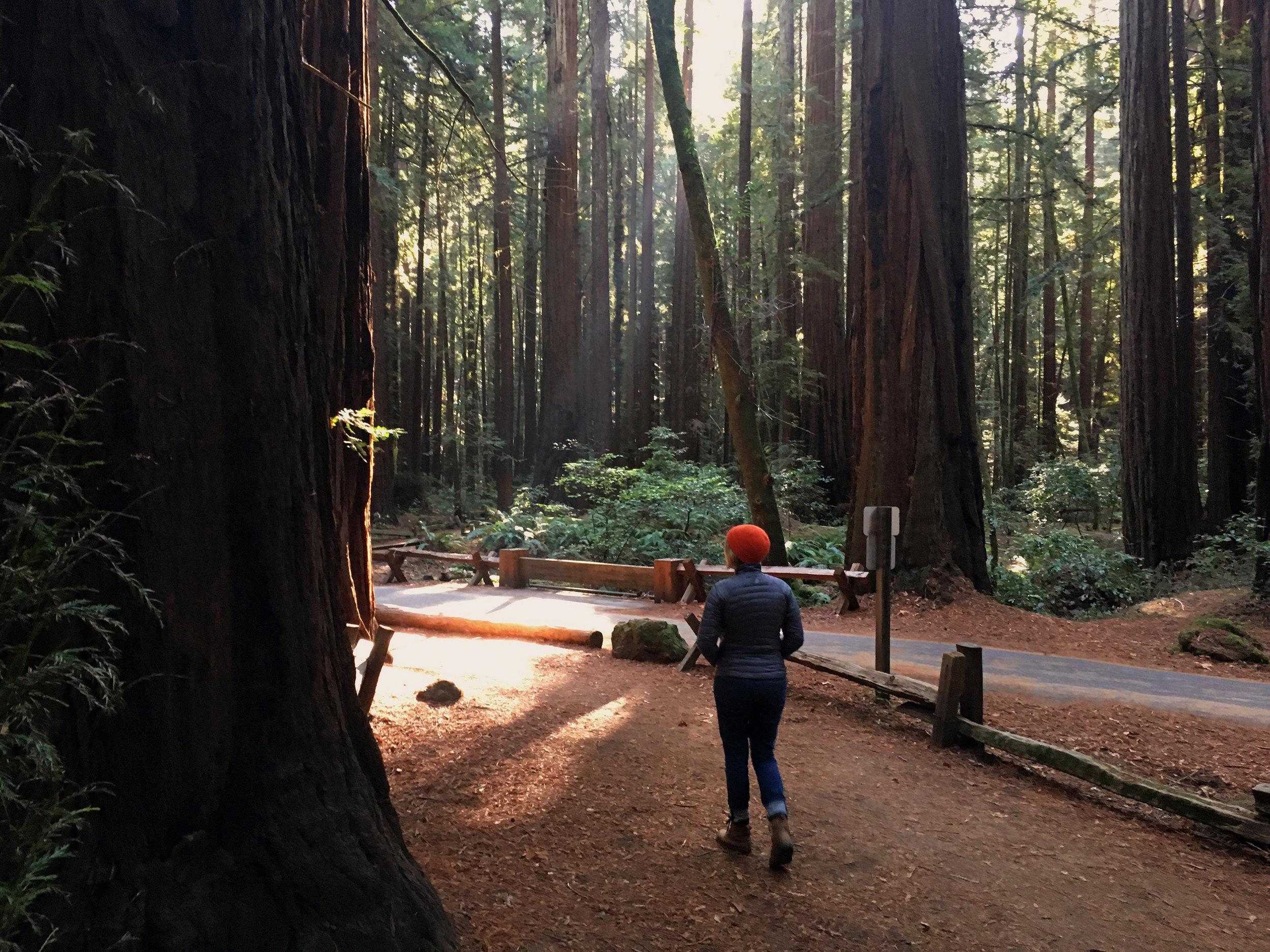 quillandarrowredwoods.jpg