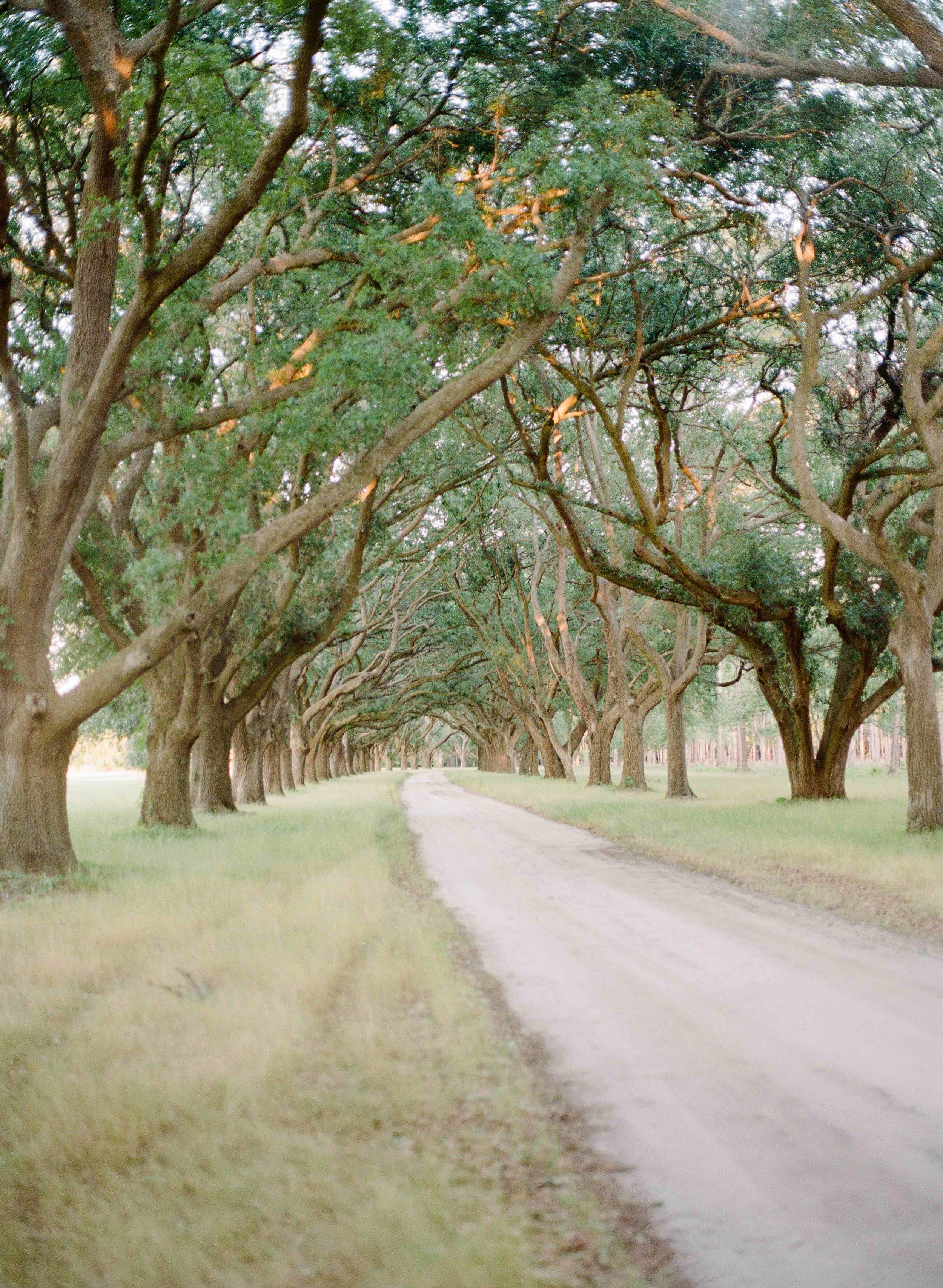 Row of Trees.jpg