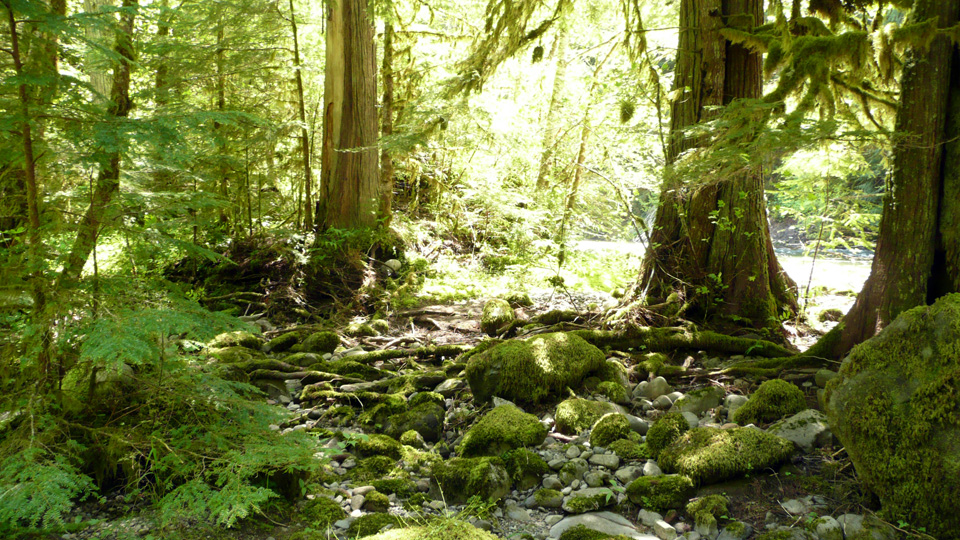 Oregon creek side.jpg